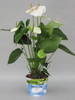 Комнатные растения 05