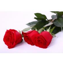 Роза Фридом 50 см