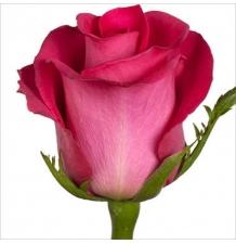 роза топаз 50см