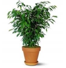 Комнатные растения 02