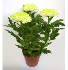 Комнатные растения 04