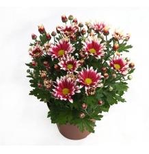 Комнатные растения 06