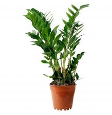 Комнатные растения 07
