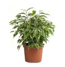 Комнатные растения 08