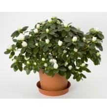 Комнатные растения 12