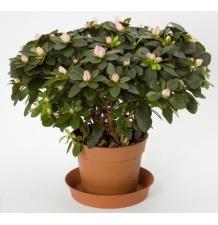 Комнатные растения 13