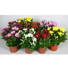 Комнатные растения 18