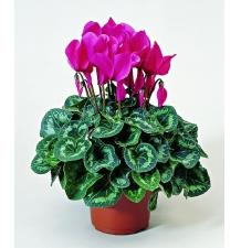 Комнатные растения 19