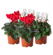 Комнатные растения 21
